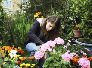Semeie flores para a primavera