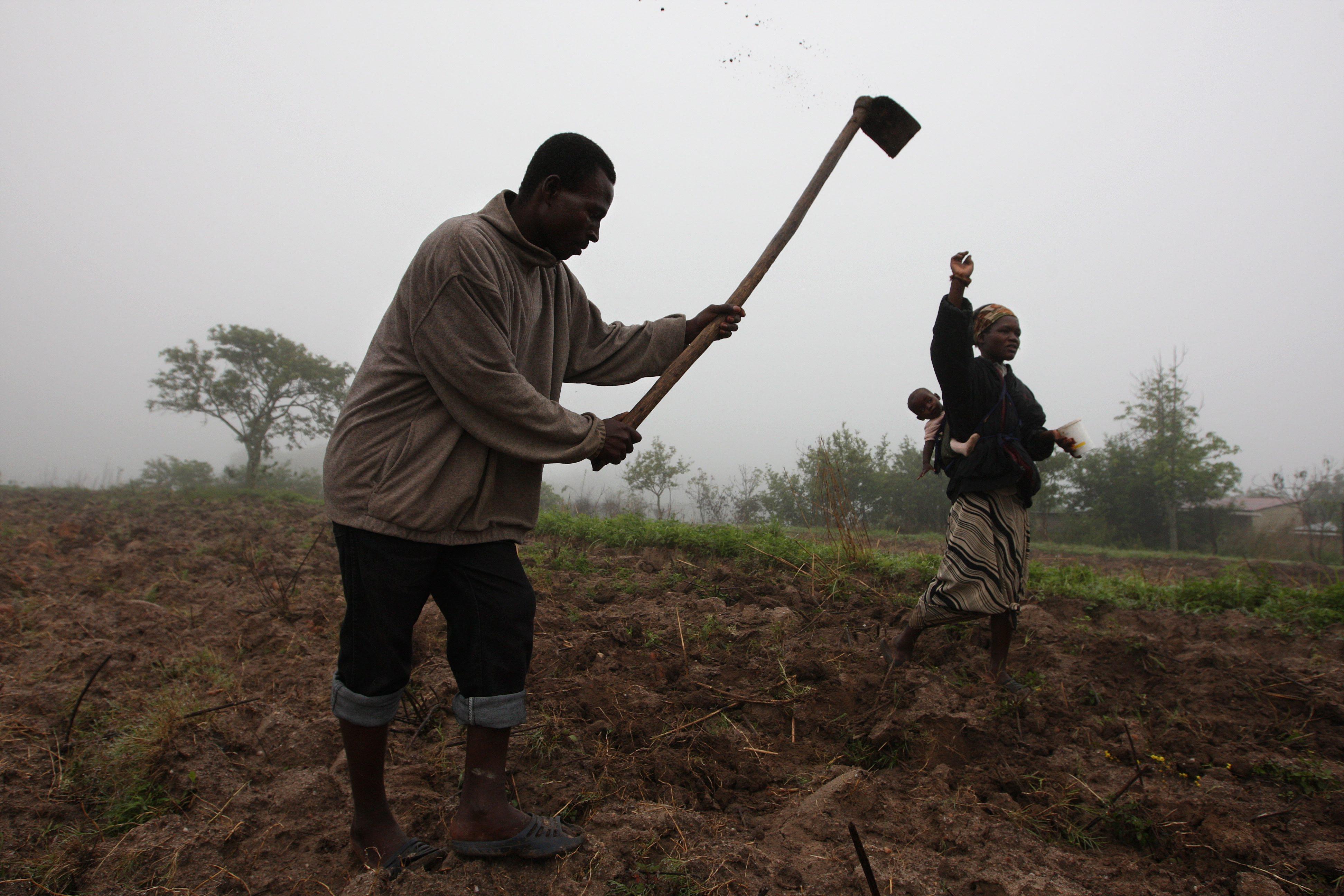 Auditoria a fundo de promoção agrícola na Guiné-Bissau revela má gestão