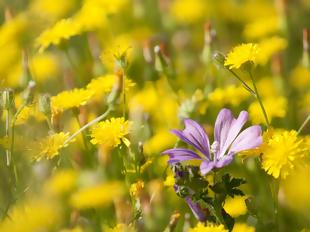Abril de flores mil