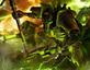 Imagem Warhammer 40.000: Ecrãs