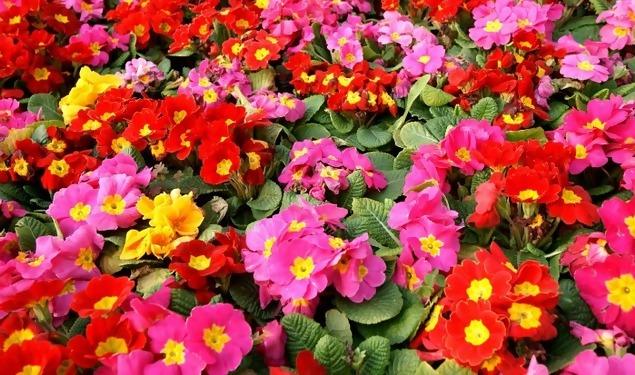 flores jardim primavera:Éli de bem com a vida!!!: Primavera: tempo de florescer o que de