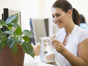 Como regar os vários tipos de plantas