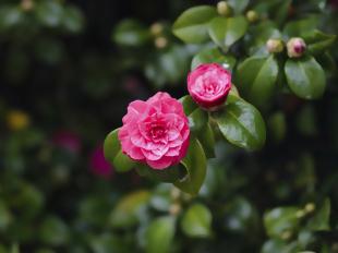 Arbustos mais cuidados em abril