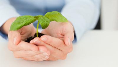 Pós-Parto: 8 plantas medicinais amigas das mamãs